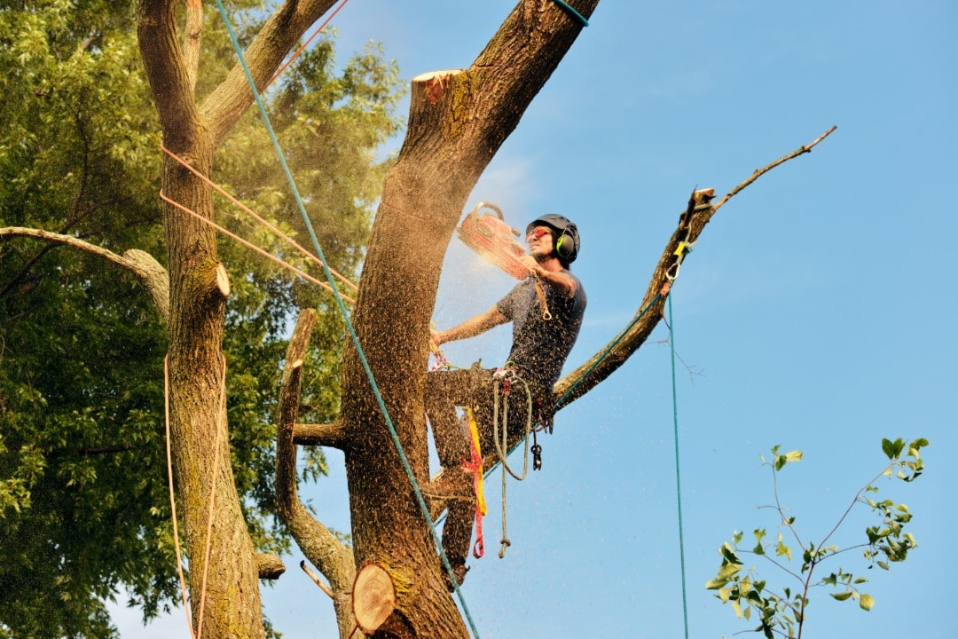 adelaide affordable tree removal