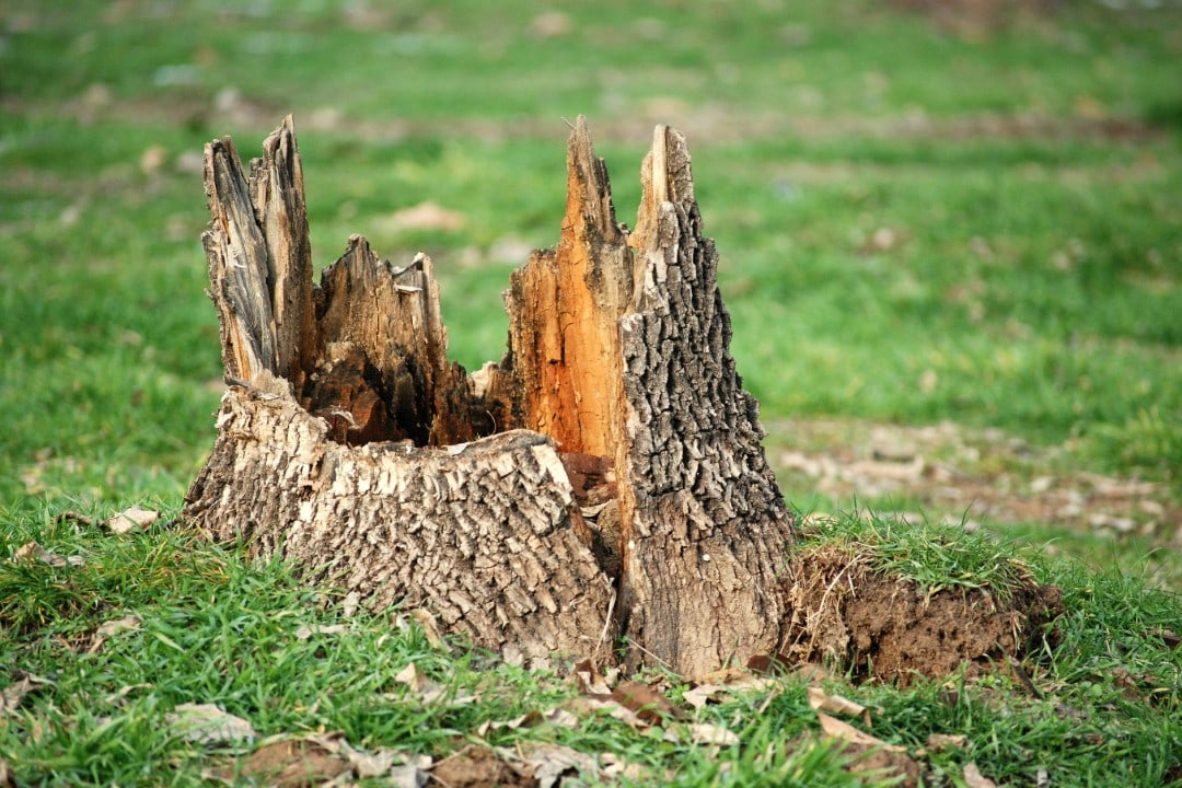Tree and Stump Removal Adelaide